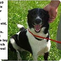 Adopt A Pet :: # 310-10 - ADOPTED! - Zanesville, OH