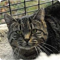 Adopt A Pet :: Angelina - Lunenburg, MA
