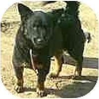 Adopt A Pet :: China - dewey, AZ