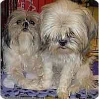 Adopt A Pet :: 7 purebreds - Lucerne Valley, CA