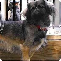 Adopt A Pet :: Betty - Richmond, VA
