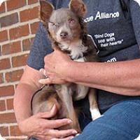 Adopt A Pet :: Spike - Wilmington, MA