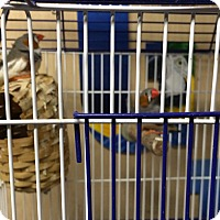 Adopt A Pet :: Dinky & Boomer - Woodbridge, NJ
