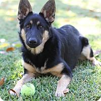 Adopt A Pet :: Annika - Yorba Linda, CA
