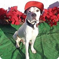 Adopt A Pet :: Raleigh - Lebanon, ME
