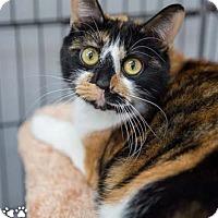 Adopt A Pet :: Breanna - Merrifield, VA