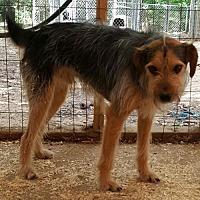 Adopt A Pet :: Lucky - Baileyton, AL