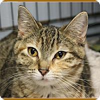 Adopt A Pet :: Jessie - New Richmond,, WI