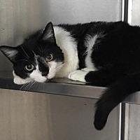 Adopt A Pet :: Brittany - Furlong, PA