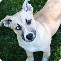 Adopt A Pet :: D24 Litter-Lilly ADOPTED - Livonia, MI