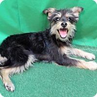 Adopt A Pet :: Babs - San Diego, CA