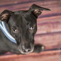 Adopt A Pet :: Brute - Waco, TX