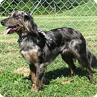 Adopt A Pet :: I'M ADOPTED Bonnie Blu - Oswego, IL