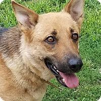 Adopt A Pet :: Sarobi - Henderson, KY