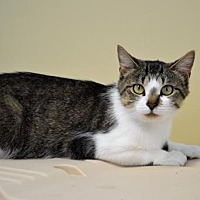 Adopt A Pet :: Meadow - Franklin, IN