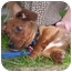Photo 2 - Dachshund/Terrier (Unknown Type, Small) Mix Puppy for adoption in Harbor City, California - Owen