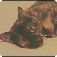 Adopt A Pet :: Olivia - Madison, TN