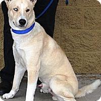 Adopt A Pet :: Teddy - Gilbert, AZ