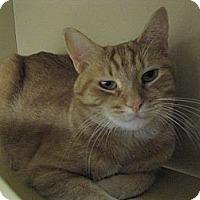 Adopt A Pet :: Minnie & Ferbie - Temple, PA