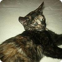 Adopt A Pet :: JUNEBUG - Phoenix, AZ