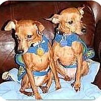 Adopt A Pet :: Popcorn and Peanut - Nashville, TN