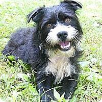 Adopt A Pet :: Felix - Mocksville, NC