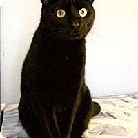 Adopt A Pet :: Panther - Medway, MA