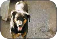 Rottweiler Mix Dog for adoption in Macon, Georgia - Rocky