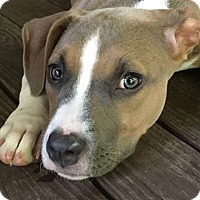 Adopt A Pet :: Frankie - Alpharetta, GA