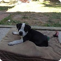 Adopt A Pet :: Odo - Barnegat, NJ