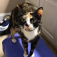Adopt A Pet :: Ashley - Smithfield, NC