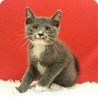 Adopt A Pet :: Dove - Modesto, CA