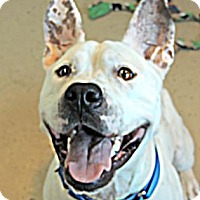 Adopt A Pet :: Blind Faith - Mission, KS