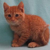 Adopt A Pet :: Thumper - Redwood Falls, MN