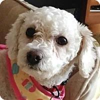 Adopt A Pet :: Dixie - La Costa, CA