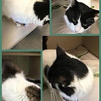 Adopt A Pet :: Spud - Cheboygan, MI