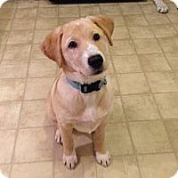 Adopt A Pet :: Mindy - Foster, RI