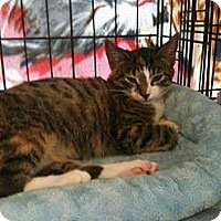 Adopt A Pet :: Dora - West Dundee, IL