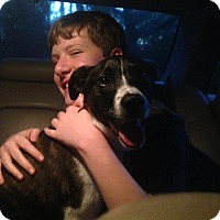 Adopt A Pet :: Toby - Homewood, AL