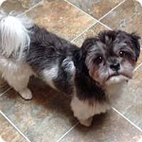 Adopt A Pet :: Gypsy - Mississauga, ON