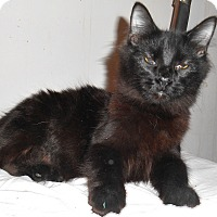 Adopt A Pet :: Black - Chattanooga, TN