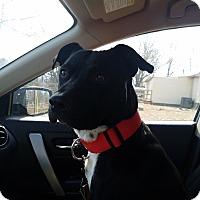 Adopt A Pet :: Zeus - Boston, MA