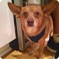 Adopt A Pet :: Peanut ( courtesy post) - Scottsdale, AZ