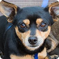 Adopt A Pet :: Tiny Boy - Irvine, CA