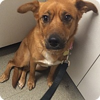 Adopt A Pet :: Kendra - Oak Ridge, NJ