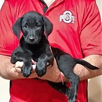 Adopt A Pet :: Zoey - South Euclid, OH