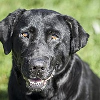 Adopt A Pet :: Sassy - 28612 - Petaluma, CA