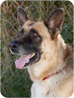German Shepherd Dog Dog for adoption in Los Angeles, California - Maddie von Magdeburg