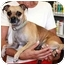 Photo 1 - Chihuahua/Pug Mix Dog for adoption in Coral Springs, Florida - LuLu