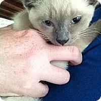 Adopt A Pet :: TJ - Xenia, OH